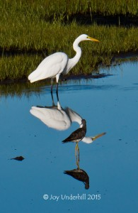 Egret with Company